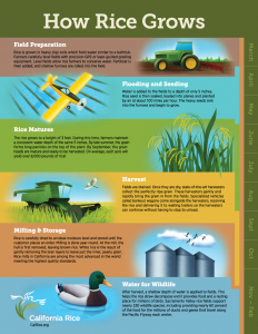 Image from California Rice Commission
