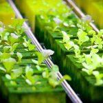 Indy Farmer Addresses Urban Food Deserts